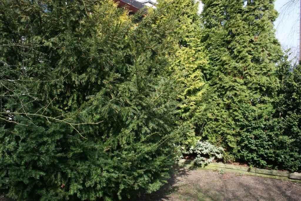 anlægsgartner og gartner tilbud